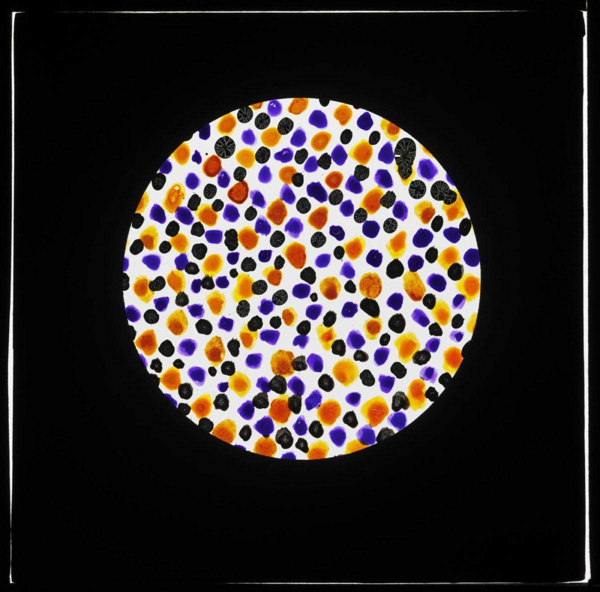Illustrasjon av farget korn av stivelse i autokromplate.