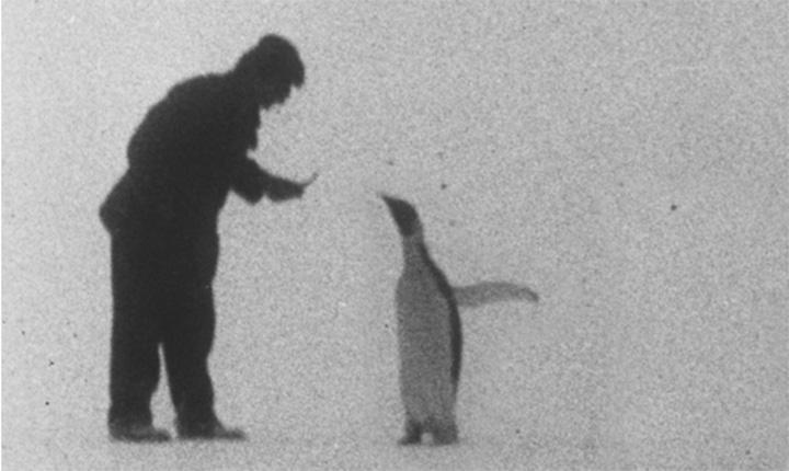 Bilde av Amundsen og pingvin