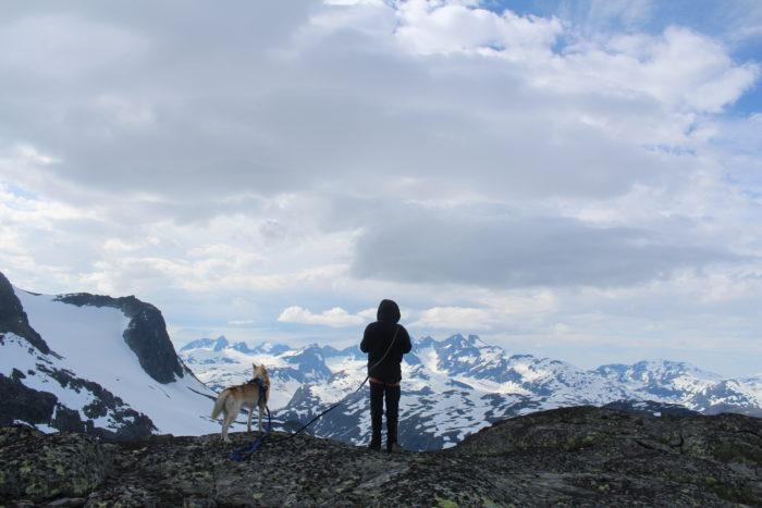 Fjellandskap. Mann med hund.