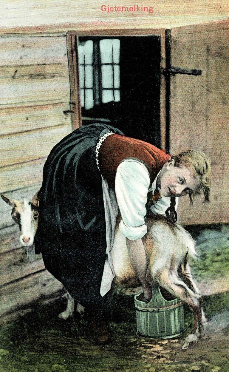 Mjølking av geit, ca. 1905–1910